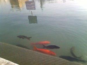 Индия Рыбы Золотой храм