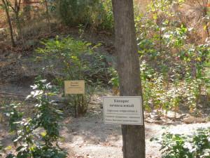 Калина и кипарис вечнозеленый