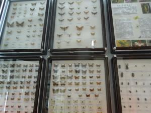 Коллекция бабочек с Карадага