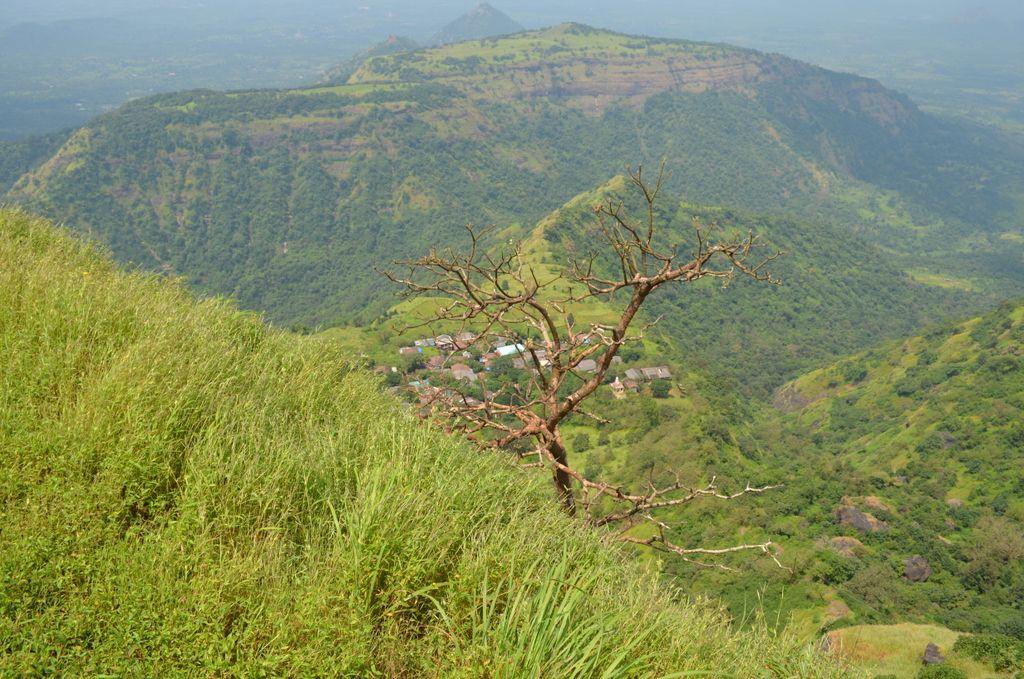 Сухое дерево утопает в сочной зелени
