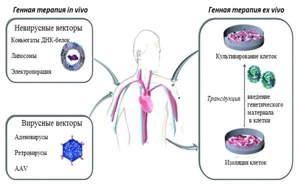 генотерапия