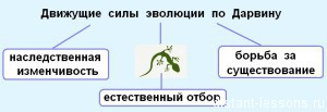 Движущие силы эволюции по Дарвину