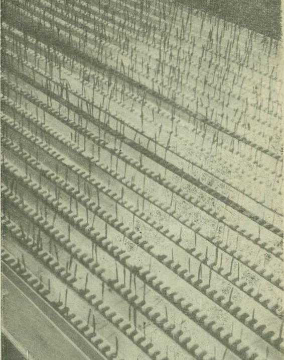 Расположение реек с растениями пшеницы в поддоне (книга Замкнутая система: человек – высшие растения